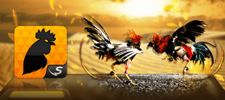 Cock Fight Online casino Game Malaysia